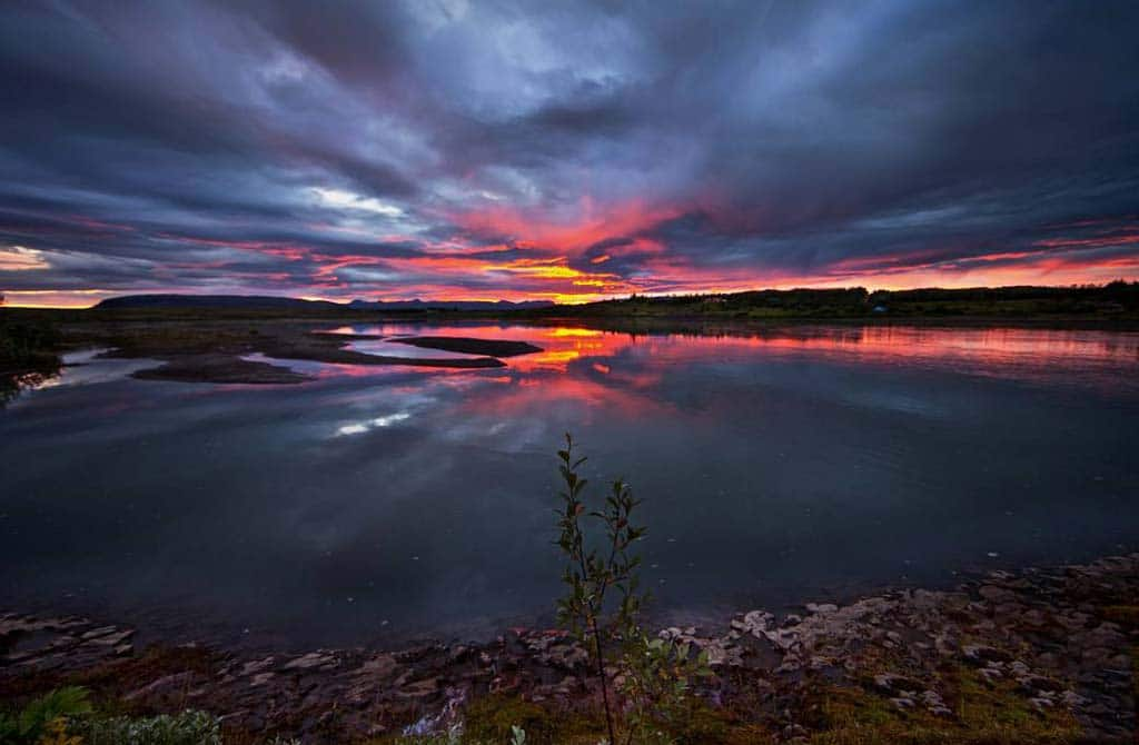Small tree red sunset in Iceland